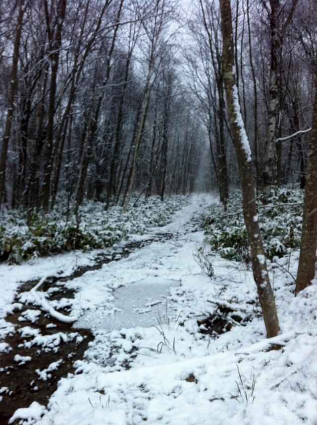 Zimoy - It's Winter (Again)